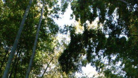 竹林と石碑――変な形の石碑に込められた想い【安房須神社】