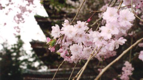 「第1回 松戸の寺社春色フォトコンテスト」結果発表