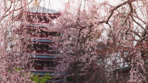 「第2回 松戸の寺社春色フォトコンテスト」結果発表