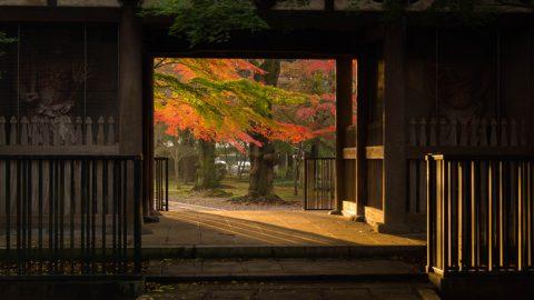 「第3回 寺社を彩る紅葉!フォトコンテスト」結果発表