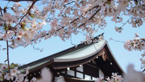 「第3回 松戸の寺社春色フォトコンテスト」結果発表