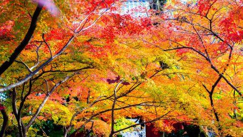 「第2回 寺社を彩る紅葉!フォトコンテスト」結果発表