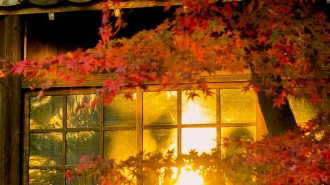 「第6回 寺社を彩る紅葉!フォトコンテスト」結果発表